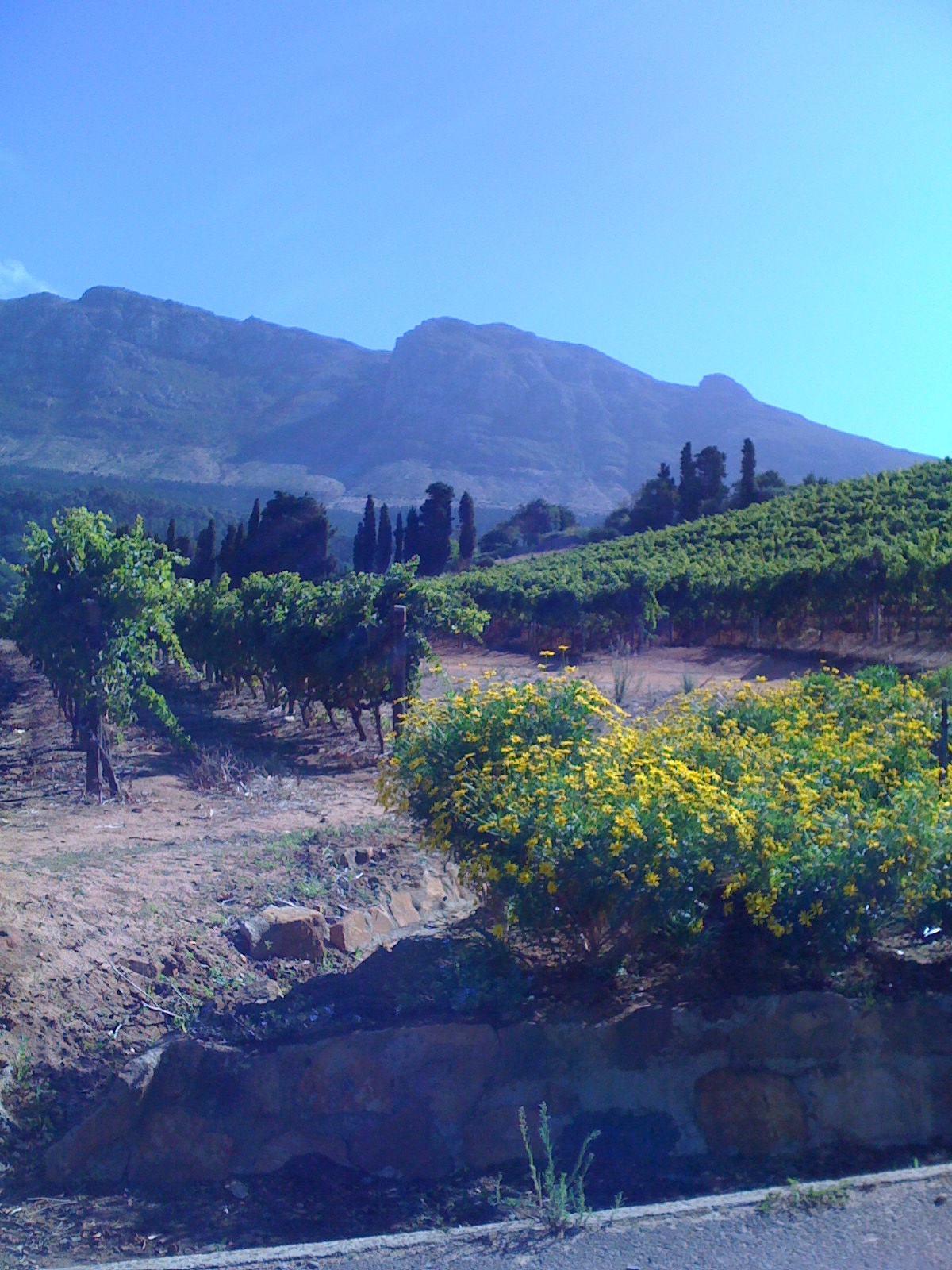 South Africa Wine Country - Constantia