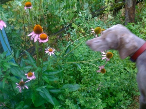 Sula Stopping to Smell the Flowers
